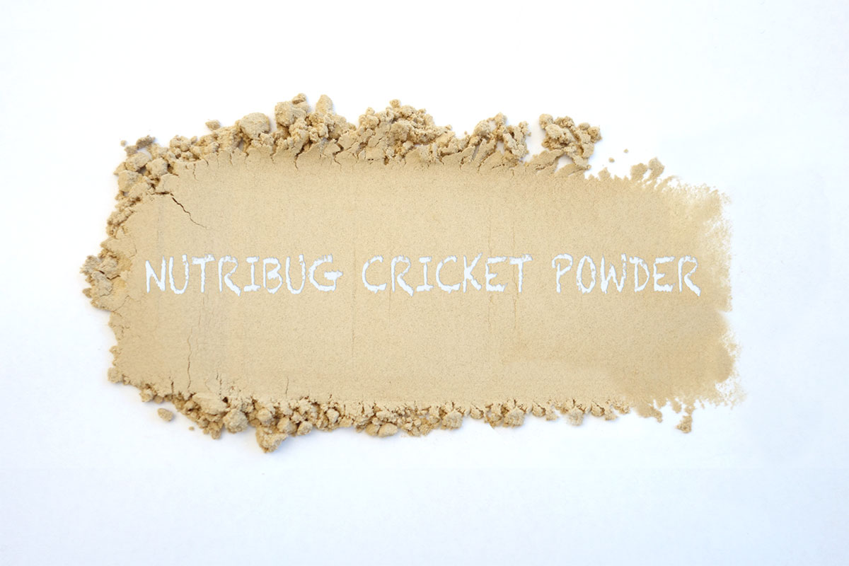 nutribug cricket powder